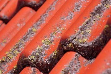 Rensning af fliser - når fliserne er angrebet af flisepest